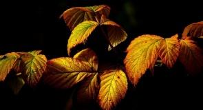 Autumn_season