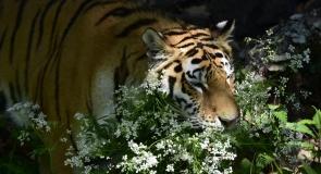 Primorsky Safari Park, Russia