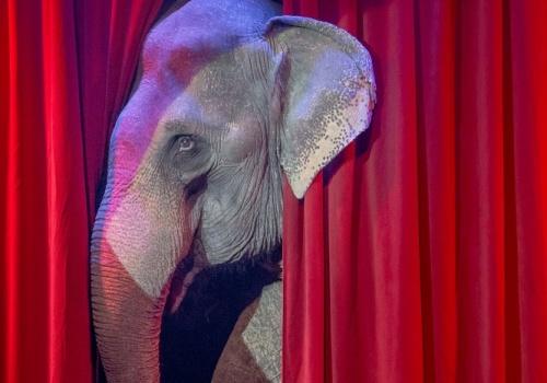 c_500_350_16777215_00_images_tours_circus_circus_3.jpg