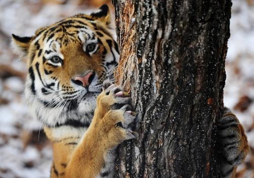 c_500_350_16777215_00_images_tours_safari-park_safari-park_3.jpg
