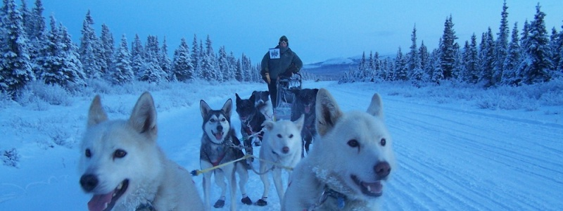 Through a lake on a dogs tour Russia